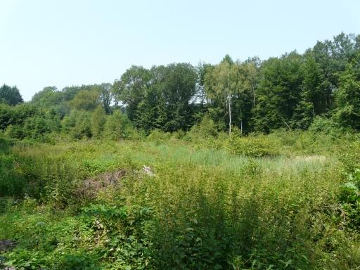 Menden-Bösperde; im Saurenkamp, nahe des Schlehdorn