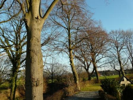 Menden-Halingen, Friedhof