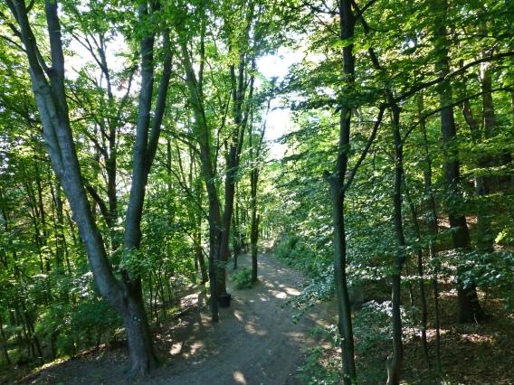 Menden, Wald am Kapellenberg