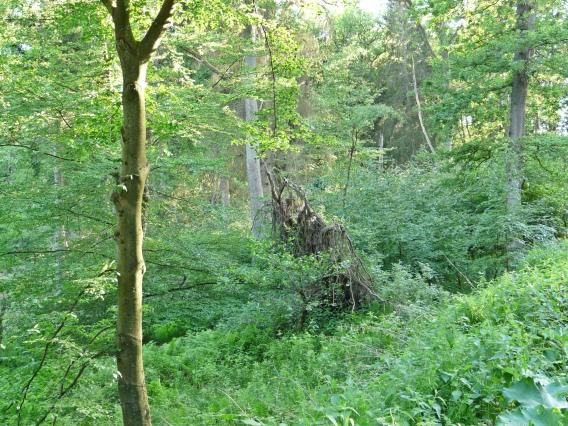Menden, in der Waldemei