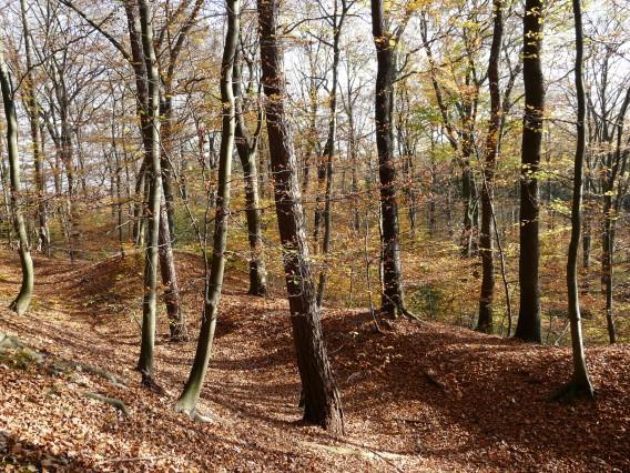 Menden, Wald am Hünenköpfchen