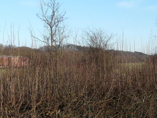 Menden-Halingen; Wassergewinnungsflächen an der Ruhr