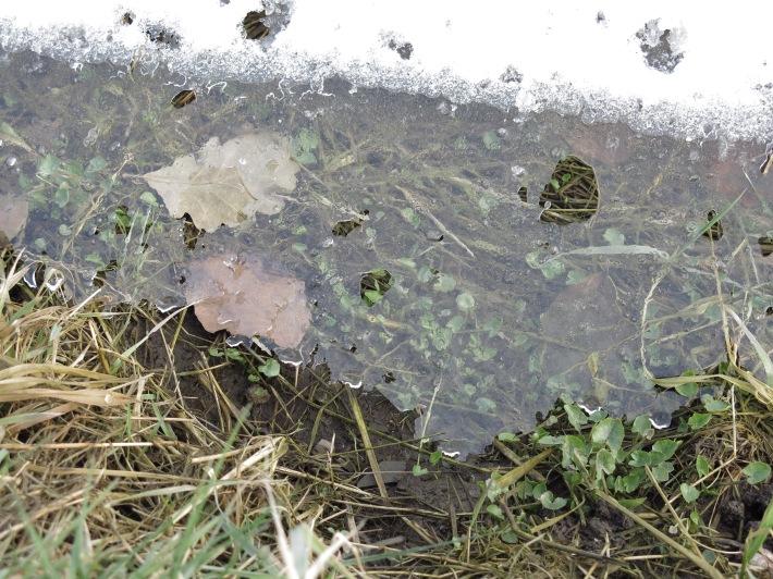 Straßengraben mit Schnee, Eis und Grün