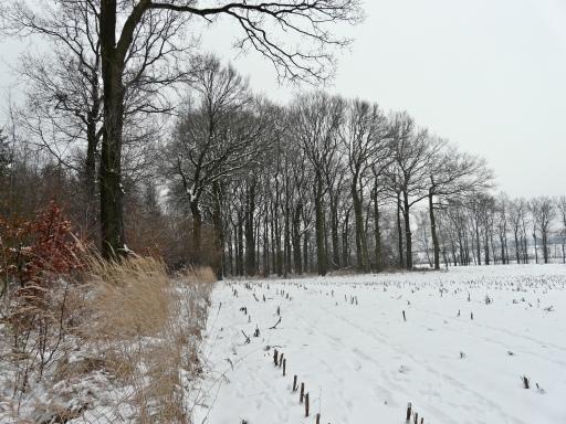 Menden, Feldgehölz  bei Halingen