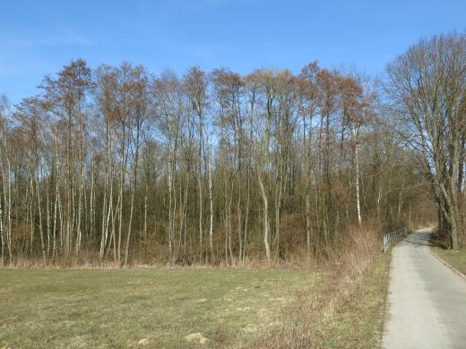 Radweg und Feldgehölz in der Frühlingssonne