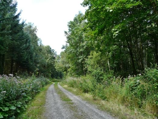 Menden, Waldweg am Haunsberg