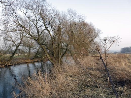Ruhrufer bei Menden-Bösperde