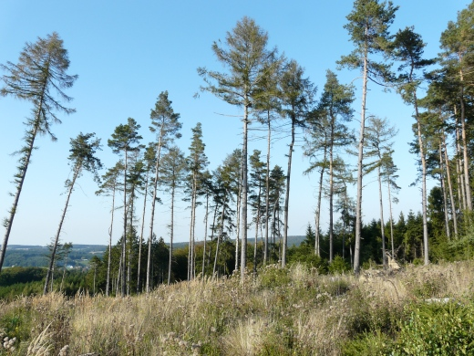 """Menden-Lendringsen, Wald """"Lange Dornen"""""""