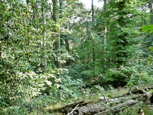 "Menden, im Naturschutzgebiet ""Rothenberg"""