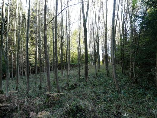 """Menden-Lendringsen; Waldstreifen mit Eschen in den """"Langen Dornen"""""""