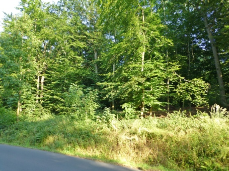 Menden, Rand der Waldemei an der Spessartstr.