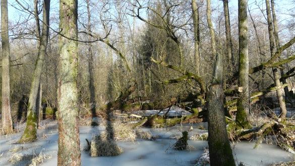 """Menden-Schwitten, Erlenbruchwald """"Auf dem Stein"""""""
