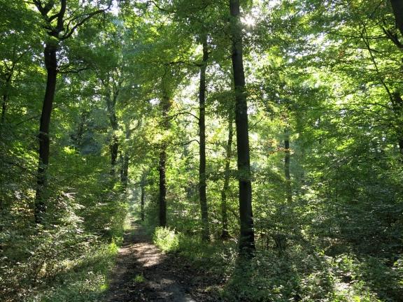 Menden-Halingen, Waldweg im Baisenbrauck
