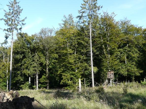 """Menden-Lendringsen; Wald """"Hessekamp"""""""