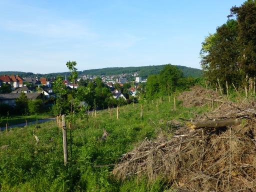 Menden, Babywald am Rand der Waldemei