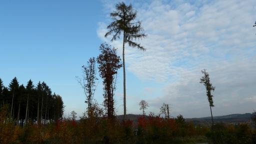 Menden, ehem. Kyrill-Windwurf-Fläche in der Waldemei