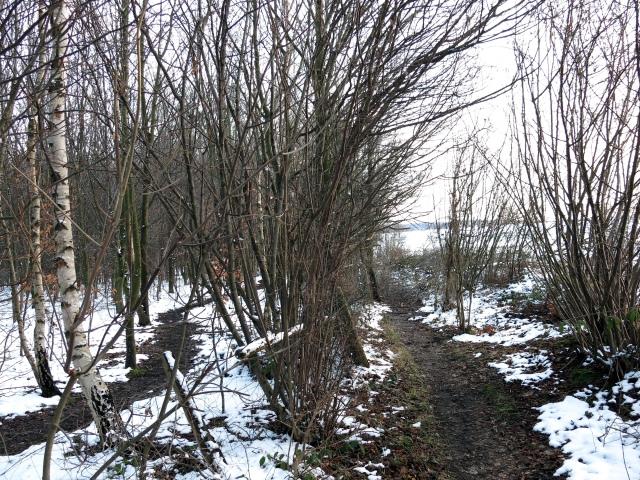 Menden-Bösperde, Waldpfade am Saurenkamp
