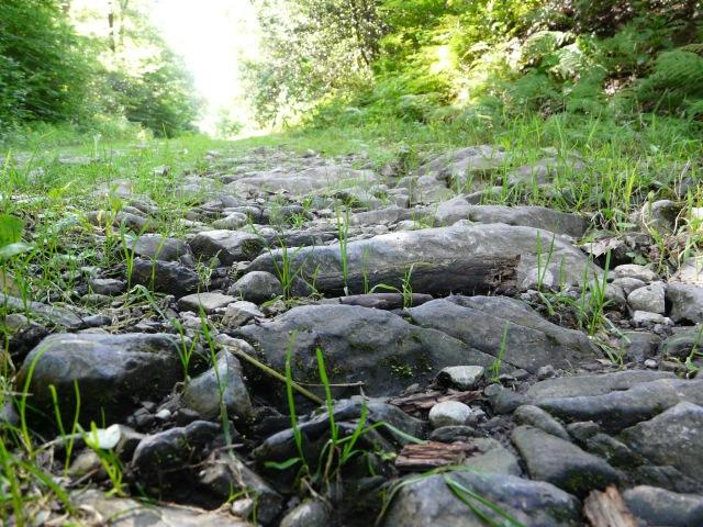 Waldweg mit grobem Naturstein (Hemerscher Weg)