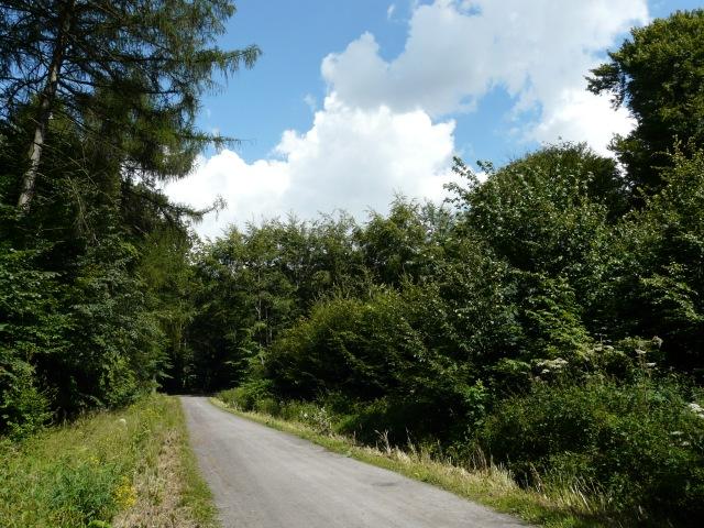 Menden, Hemerscher Weg im Stadtwald Waldemei