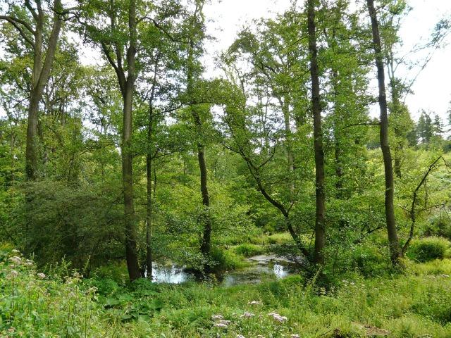 Menden, Tümpel in der südlichen Waldemei