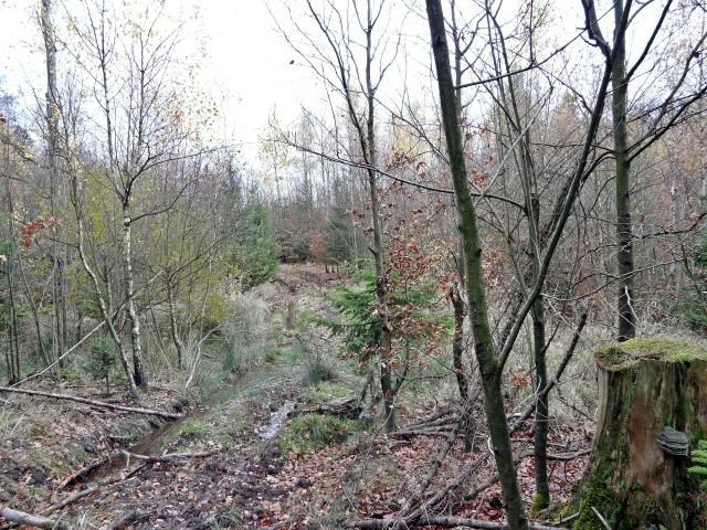 überwuchernder Forstweg im mittleren Lüer