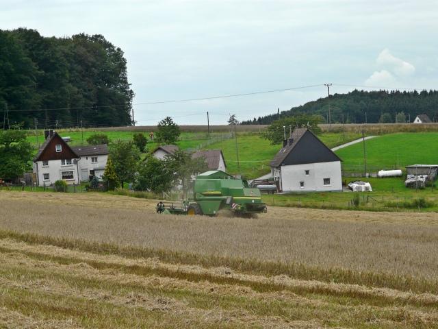 Schlaghecke von West; 07/2011