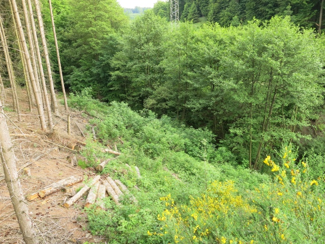 vom Jäger-Hochsitz ins obere Limbergsbachtal