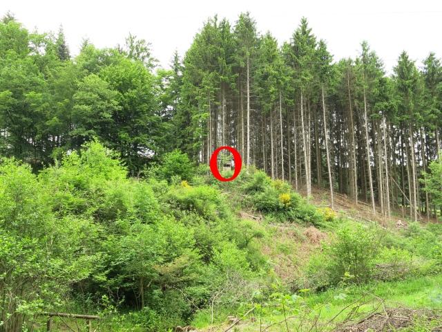 Blick aus dem Limbergsbachtal auf  Jäger-Hochsitz auf Hügel-Sporn
