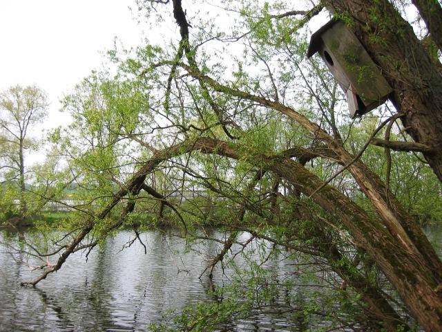 am Ruhrufer, Höhe Ententeich