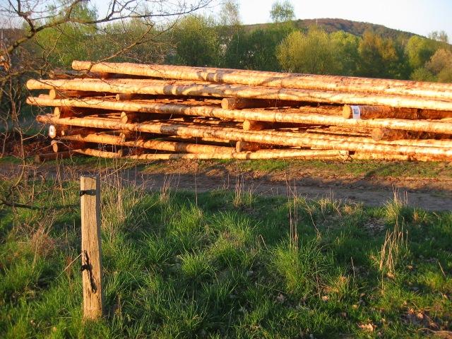 Kyrill-Holzlager oberhalb vom Gelben Morgen