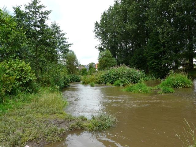 renaturierte Hönne zwischen Gewässerlehrpfad und Mendener Str.