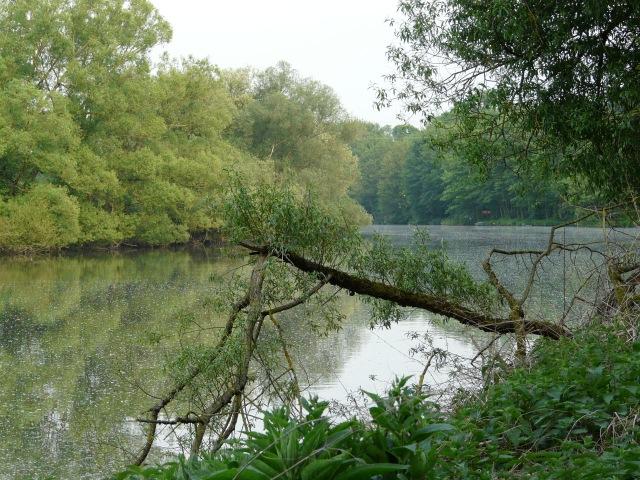 Ruhr oberhalb des Ententeichs; mit Weiden-Samen auf dem Wasser