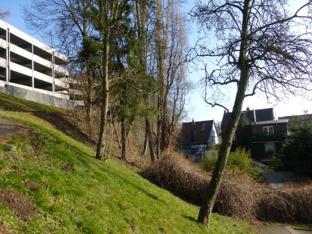 im hinteren, unteren Krankenhauspark mit Häusern Kapellenstr.