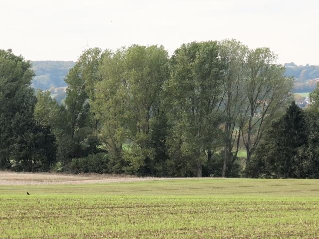 Stadtgrenze bei Brakel, entlang Ackergrenze