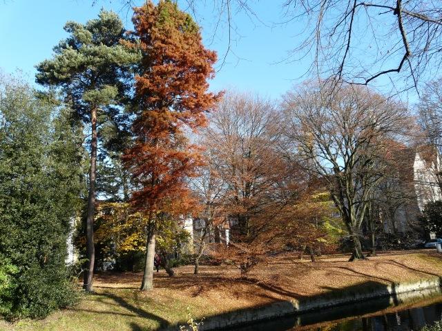 Arboretum am Walramstr.