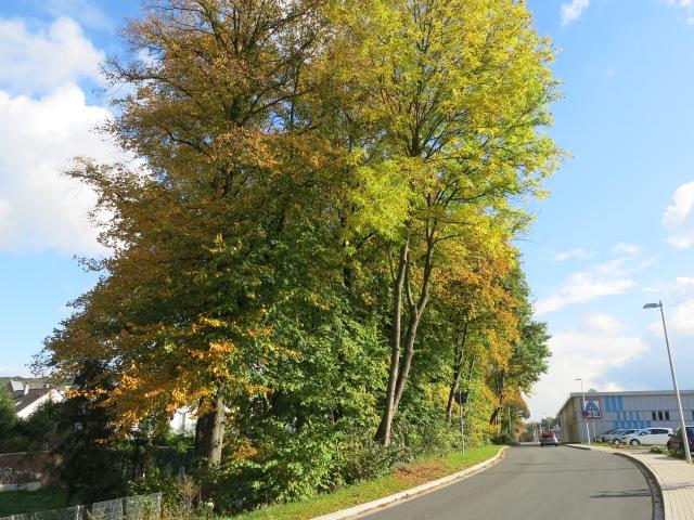 Straße Untere Promenade zwischen Bringhof und Aldi