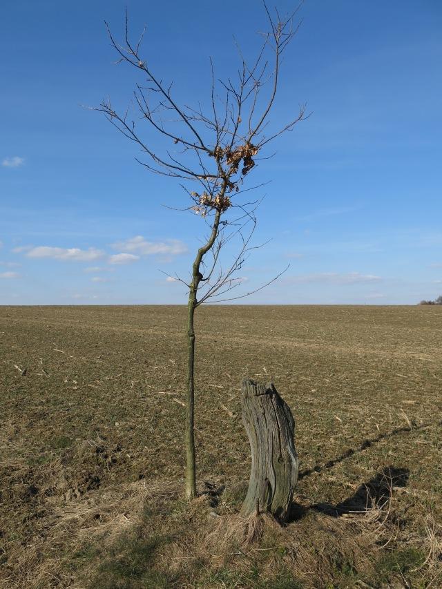 Grenze Menden-Wickede zwischen Brakel und Beringhof; Menden vorne