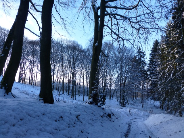 im nördlichen Ebberg-Wald